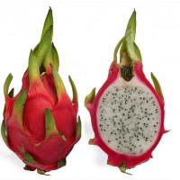 APV Dragonfruit